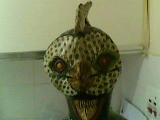 Gallus gallus or Owl up close